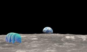 Na powierzchnię Księżyca trafiły ziemskie niesporczaki