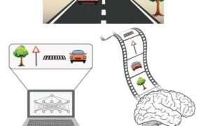 Mózg inspiruje nowy rodzaj SI