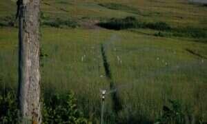 Zmiany klimatu mogą wpływać na gleby