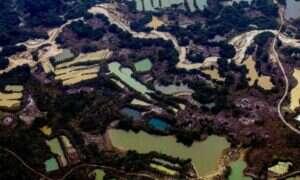 Nie tylko pożary zagrażają lasom Amazonii