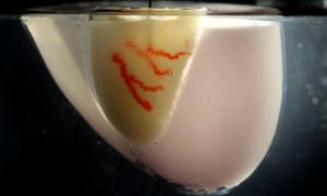 Naukowcy znaleźli lepszy sposób na biodruk 3D