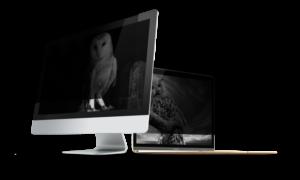Test filtra prywatyzującego Natec Owl