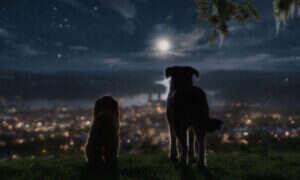 Zwiastun filmu Zakochany kundel – kolejna nowa wersja klasycznej animacji