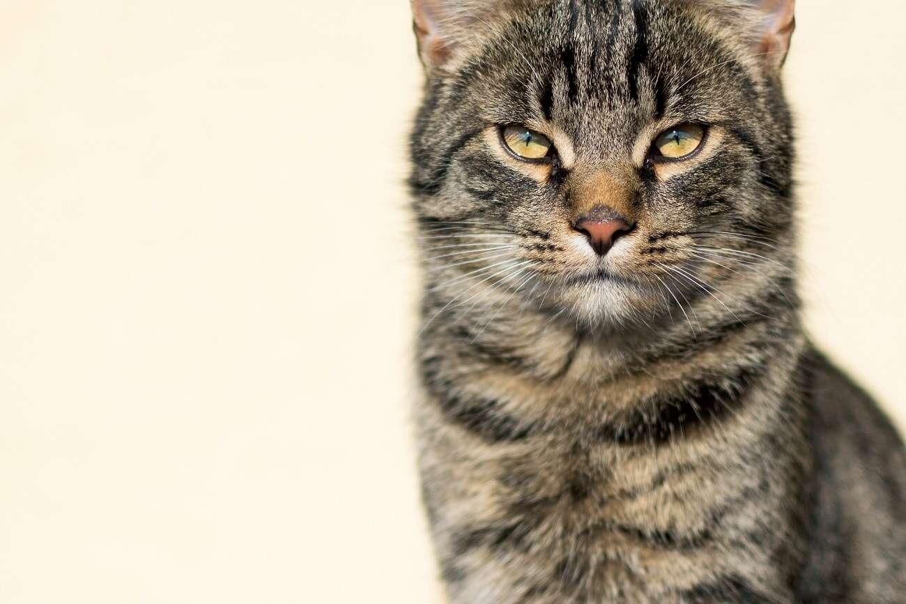 koty, pasozyty