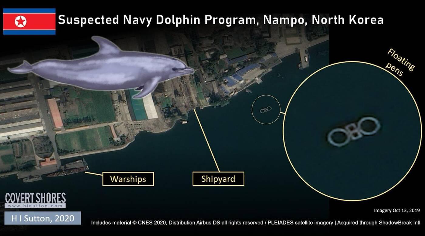wojskowe delfiny, korea północna, delfiny Korei