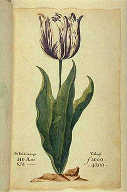 Tulipanomania , tulipany walutą, waluta tulipany