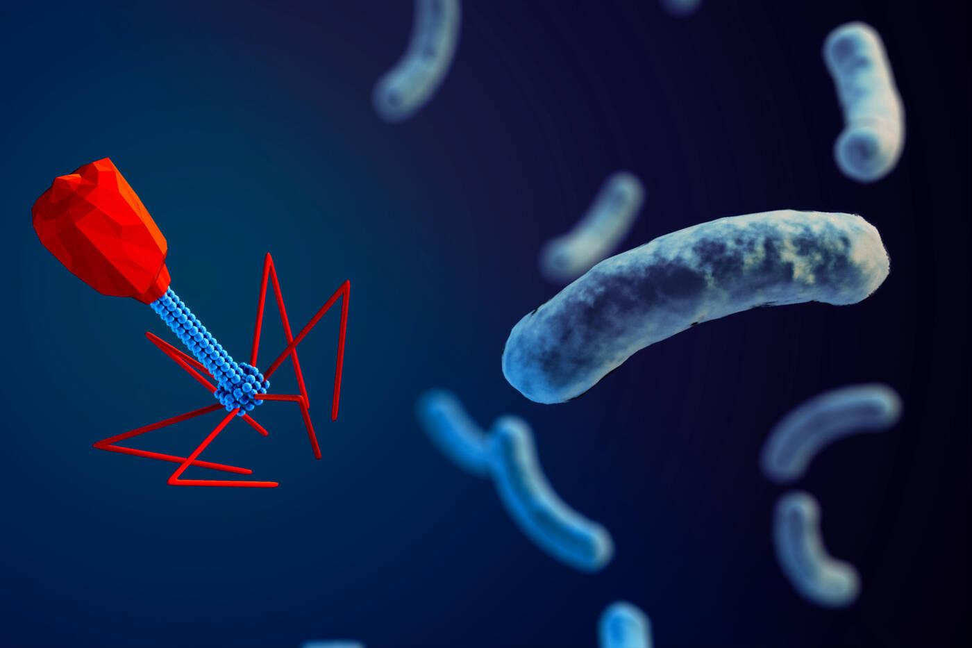 Bakteriofagi - wirusy, które polują na bakterie