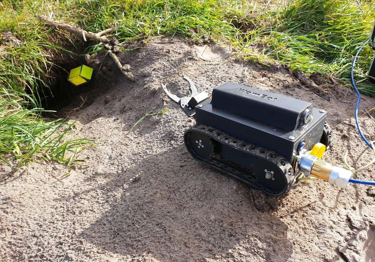 Naukowcy stworzyli robota WomBot do badania norek wombatów. Co wykazali?