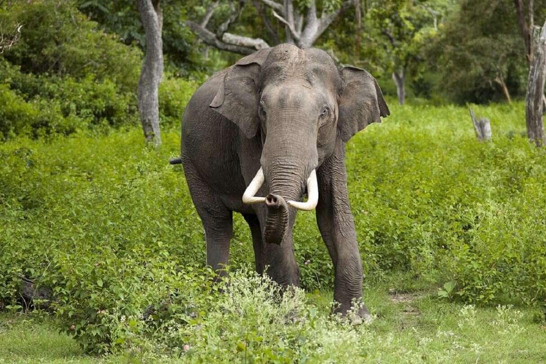 Słonie przeszły 500-kilometrowy obszar Chin i nikt nie wie, dlaczego tak się stało
