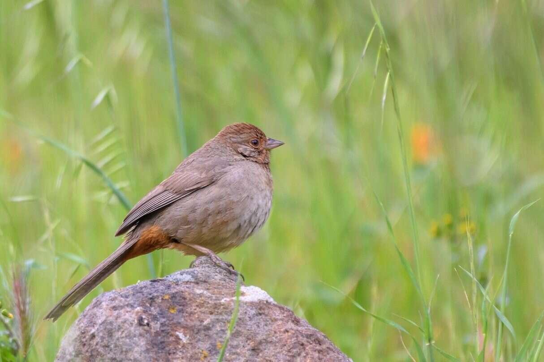 Śpiew ptaków i ludzka mowa mogą mieć ze sobą zaskakująco dużo wspólnego